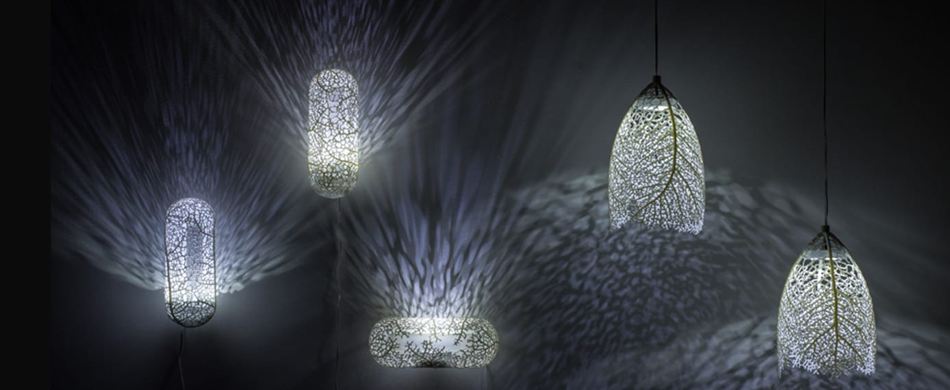 A photo of Hyphae Lamp Families by Margaret Swanson
